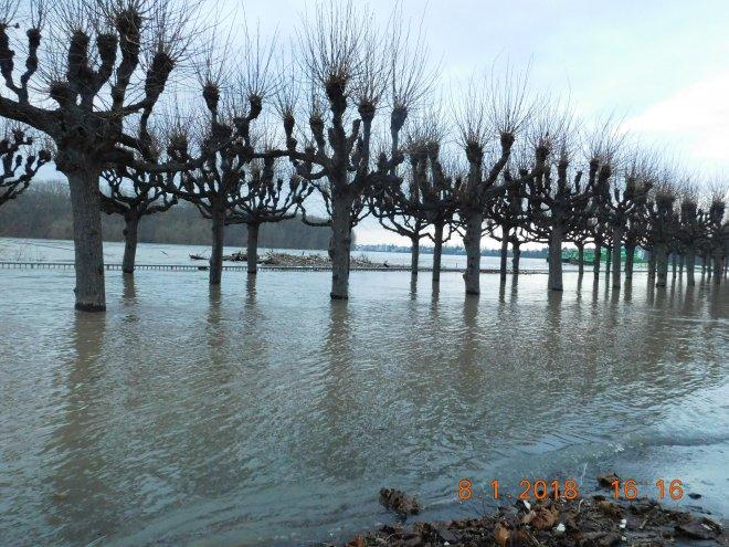Rheinhochwasser 2018 Porz